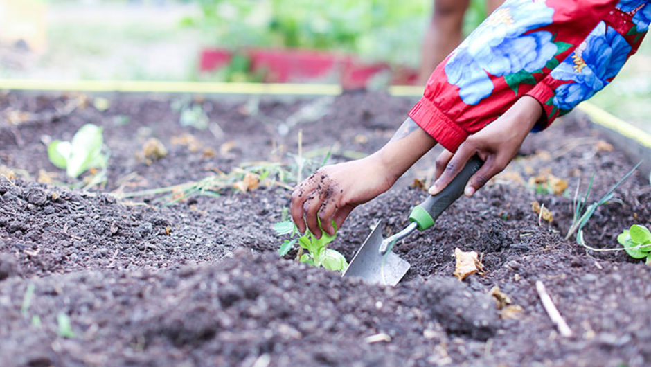 The Chicago nonprofit Gardeneers was co-founded by May Tsupros (Chicago '08) and Adam Zmick (St. Louis '05)