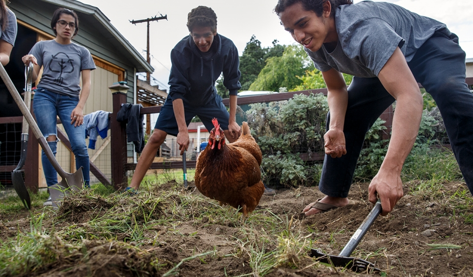 Students garden and feed chickens.