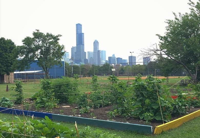 Gardeneers gives underserved students in Chicago access to hands-on gardening experiences while teaching them about healthy eating