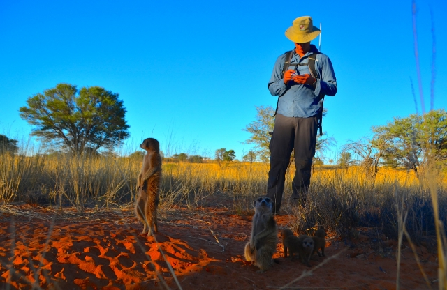 A man in a wide-brimmed hat and a blue shirt in a field, taking notes about a pair of mongooses.