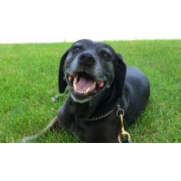 A black dog.