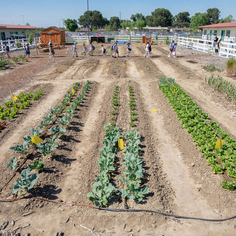 In a California Farming Community, Students Grow More than Lettuce